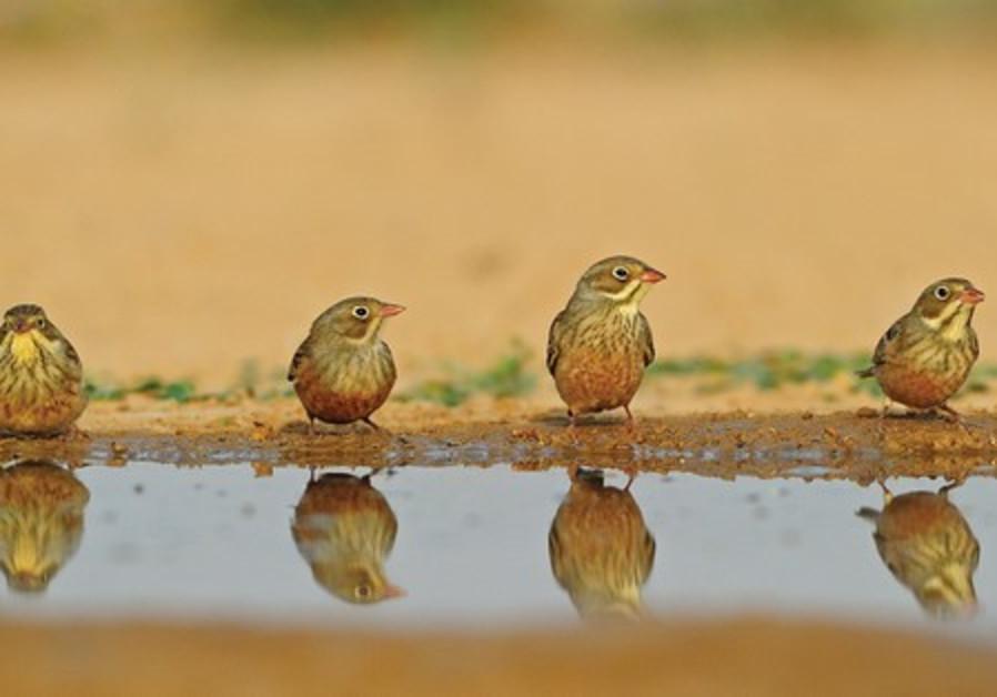 Wildlife photography exhibition