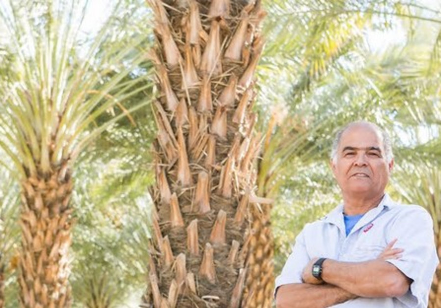 Moshe Kirat with date trees.
