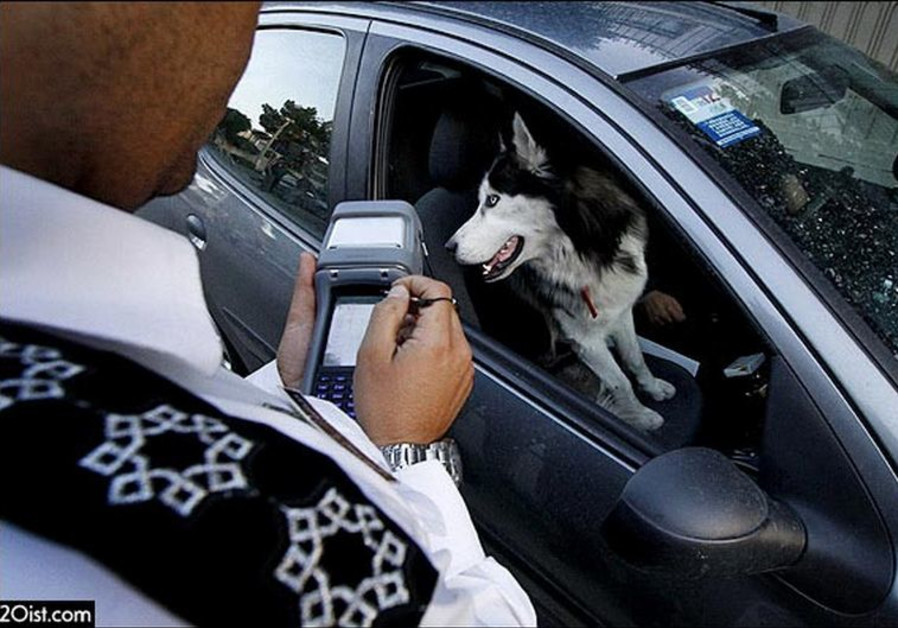 Iranian dog owner fined
