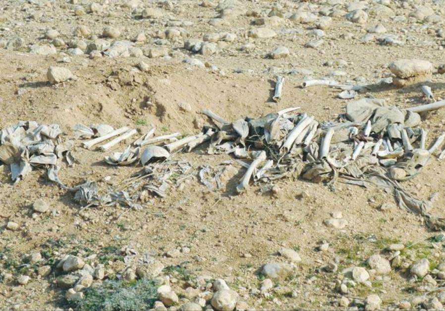 A MASS GRAVE of Yazidi victims of Islamic State is seen near Sinjar, Iraq.