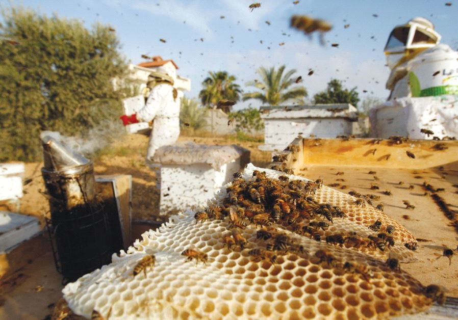 GLOBAL AGRICULTURAL production has taken a hit in recent years due to declining bee populations.