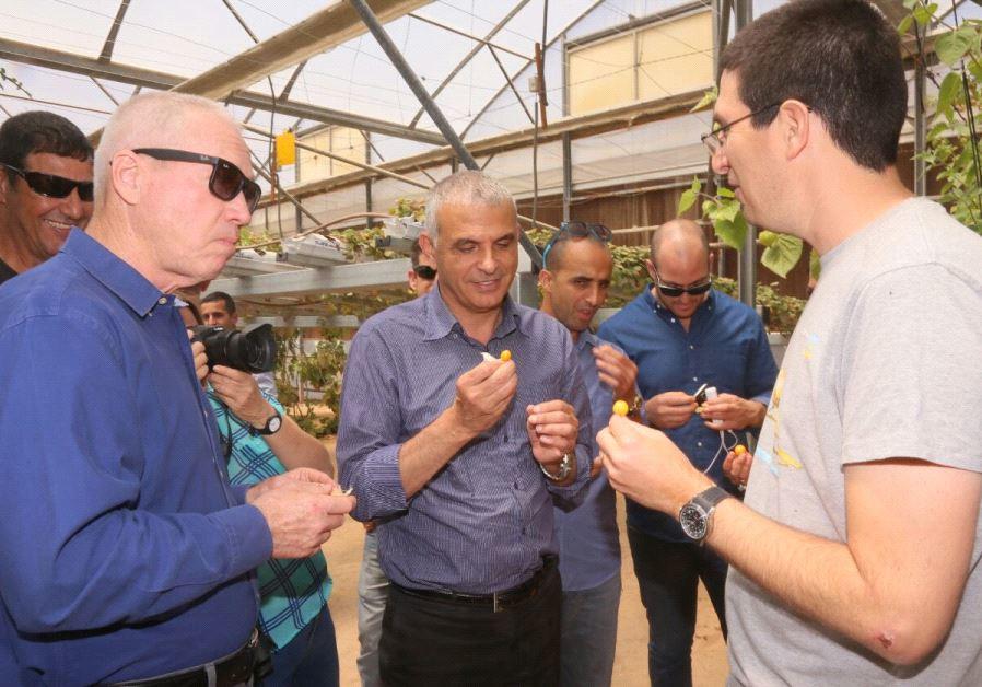 Kulanu Ministers Moshe Kahlon and Yoav Galant touring agricultural hothouses in Sapir.