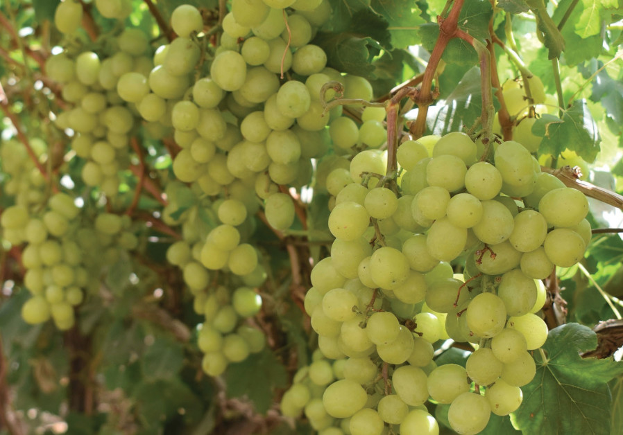Repentance through wine