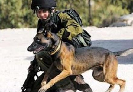 oketz dogs idf 248.88 AJ