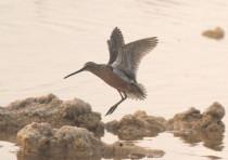 Eilat bird