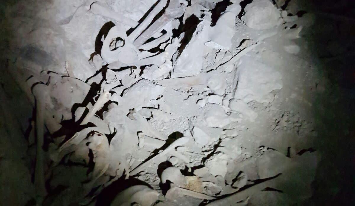 The damaged skeletons (Moshe Guttman)